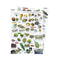 image: Guide des especes du littoral de l'Atlantique et de la Manche