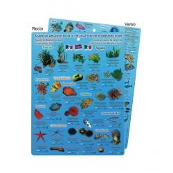 image: Guide de découverte de la vie sous marine en Mediterranee