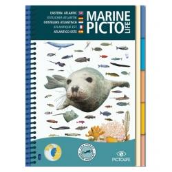 image: Marine pictolife atlantique