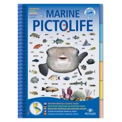 image: Marine pictolife  Atlantique tropique ouest