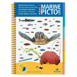 image: Marine pictolife Ocean Indien et Mer Rouge