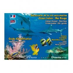 image: Decouverte de la vie sous marine Mer Rouge et Ocean Indien